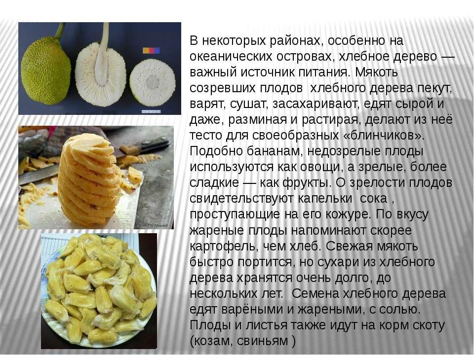 В некоторых районах, особенно на океанических островах, хлебное дерево — важн...