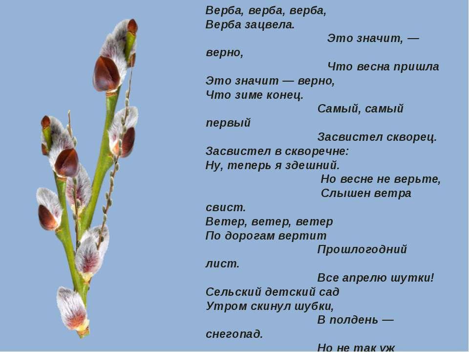 Верба, верба, верба, Верба зацвела. Это значит, — верно, Что весна пришла Это...