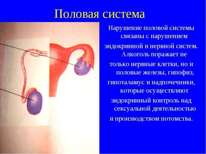 Половая система Нарушение половой системы связаны с нарушением эндокринной и ...