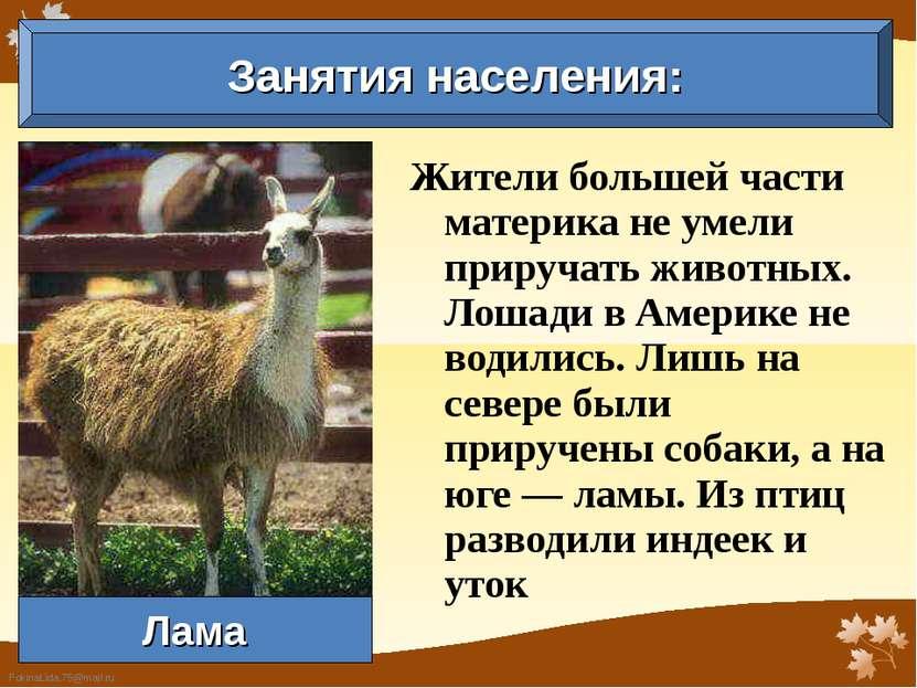 Жители большей части материка не умели приручать животных. Лошади в Америке н...