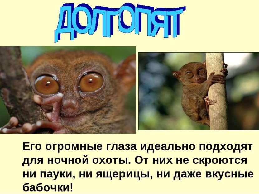 Его огромные глаза идеально подходят для ночной охоты. От них не скроются ни ...