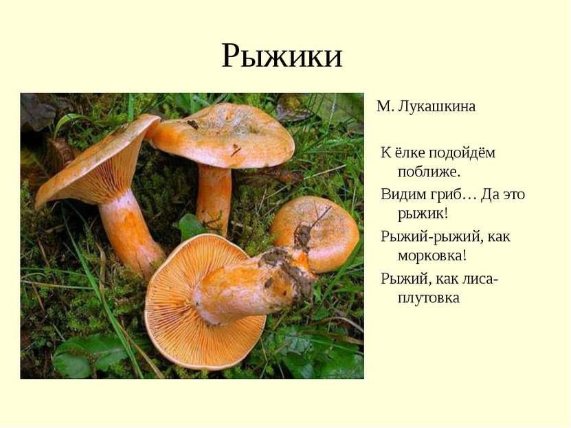 Рыжики М. Лукашкина К ёлке подойдём поближе. Видим гриб… Да это рыжик! Рыжий-...