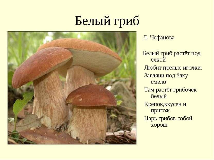 Белый гриб Л. Чефанова Белый гриб растёт под ёлкой Любит прелые иголки. Загля...