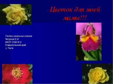 Цветок для моей мамы!!! Учитель начальных классов Чепурная Е.И. МКОУ СОШ № 8 ...