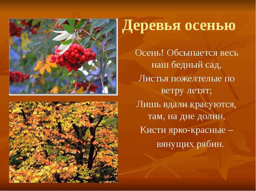 Деревья осенью Осень! Обсыпается весь наш бедный сад, Листья пожелтелые по ве...