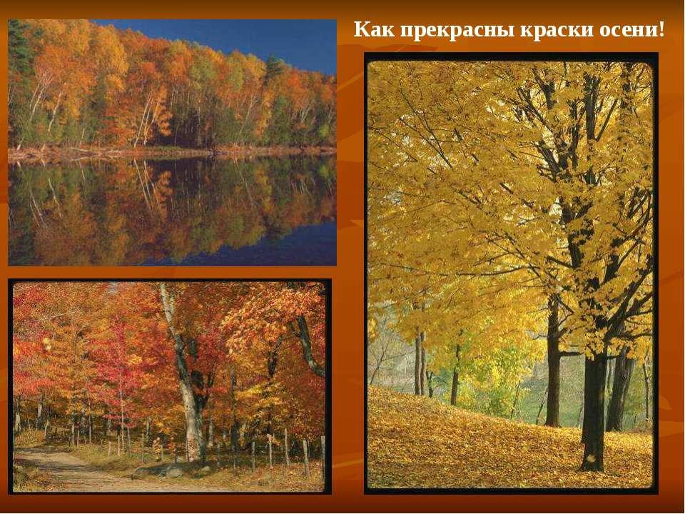 Как прекрасны краски осени! Как прекрасны краски осени!