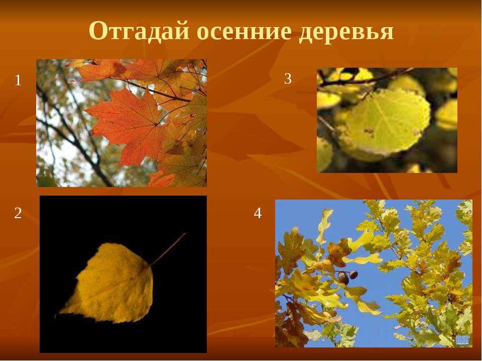 Отгадай осенние деревья 1 2 3 4