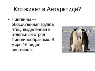 Кто живёт в Антарктиде? Пингвины — обособленная группа птиц, выделенная в отд...