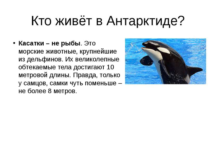 Кто живёт в Антарктиде? Касатки – не рыбы. Это морские животные, крупнейшие и...