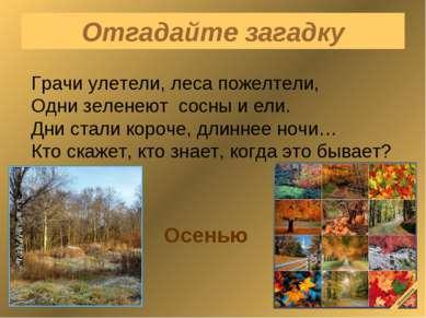 Отгадайте загадку Грачи улетели, леса пожелтели, Одни зеленеют сосны и ели. Д...
