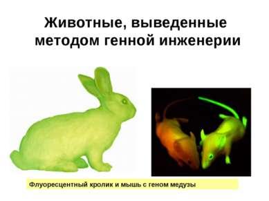 Животные, выведенные методом генной инженерии Флуоресцентный кролик и мышь с ...