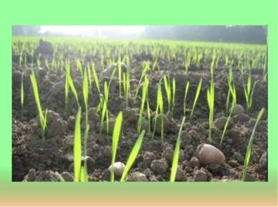Сельское хозяйство До 20 % продукции животноводства вывозится за пределы обла...