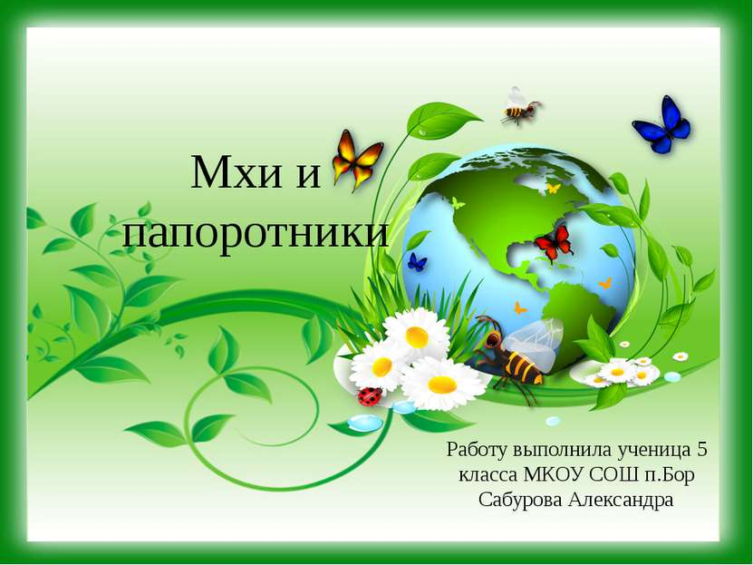 Мхи и папоротники Работу выполнила ученица 5 класса МКОУ СОШ п.Бор Сабурова А...