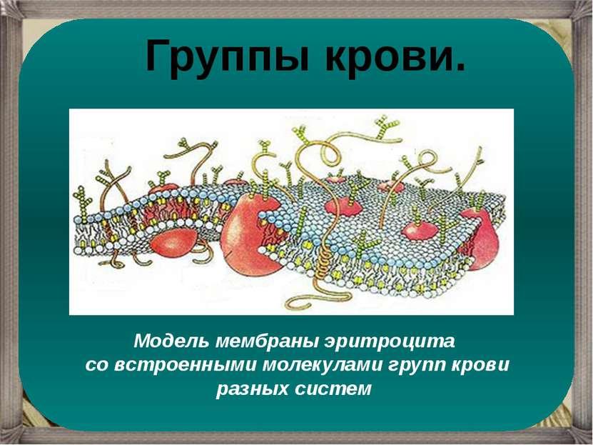 Модель мембраны эритроцита со встроенными молекулами групп крови разных систе...