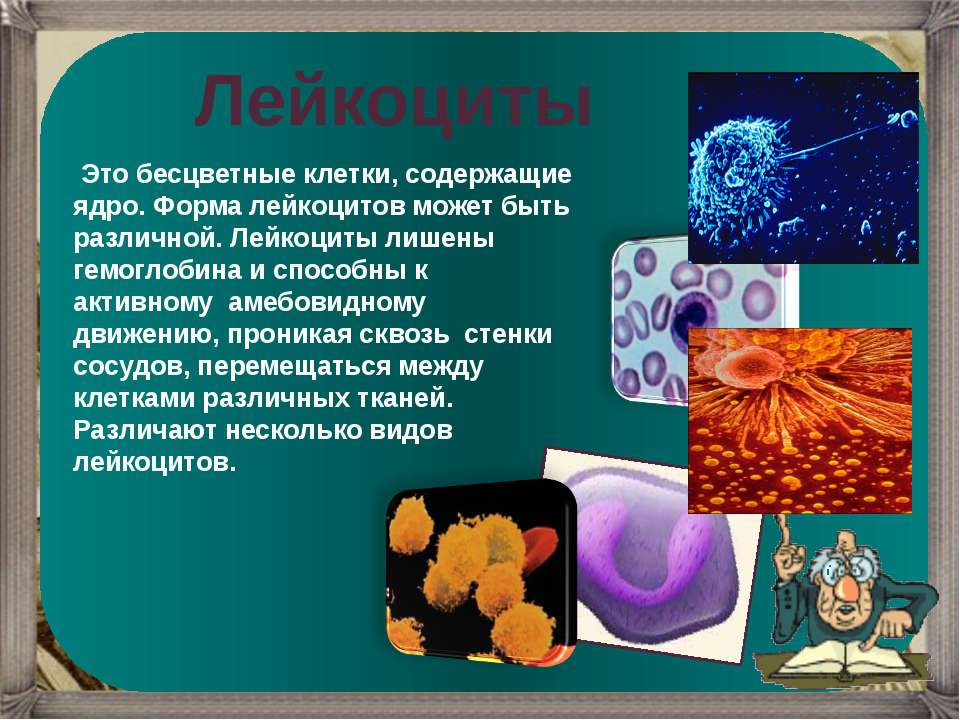 Лейкоциты Это бесцветные клетки, содержащие ядро. Форма лейкоцитов может быть...