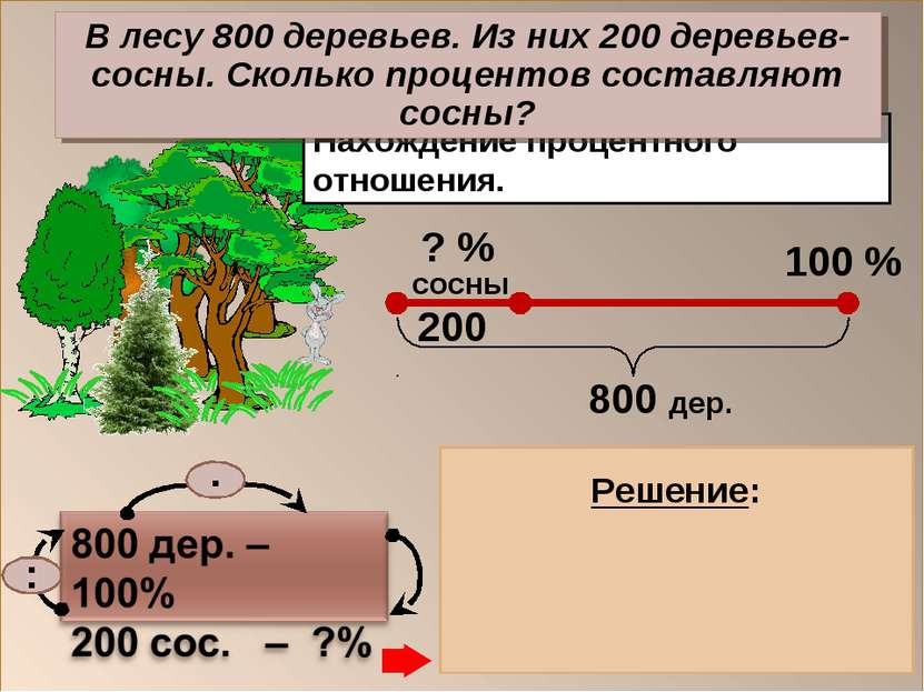 Нахождение процентного отношения. 200 : 800 = 0,25 0,25 . 100 = 25 (%) – сосн...