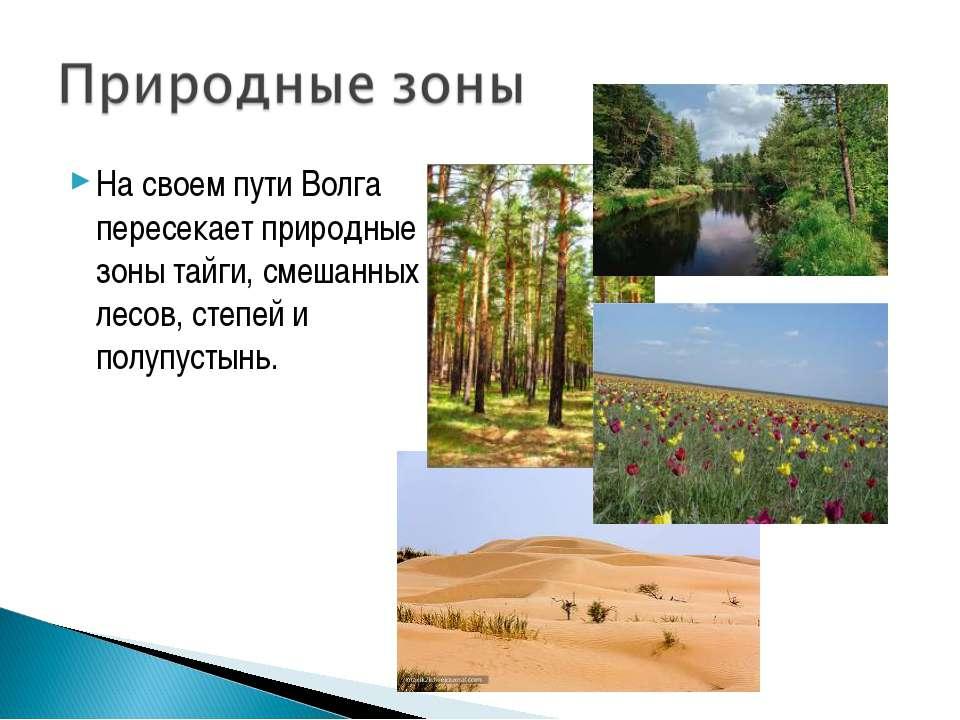 На своем пути Волга пересекает природные зоны тайги, смешанных лесов, степей ...