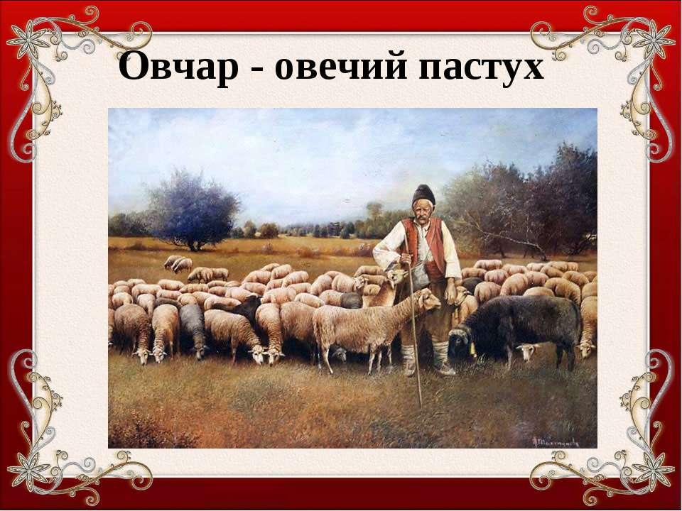 Овчар - овечий пастух
