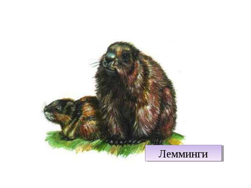 Лемминги