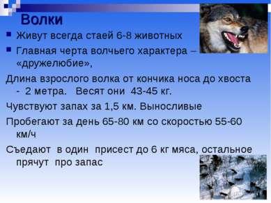 Волки Живут всегда стаей 6-8 животных Главная черта волчьего характера – «дру...
