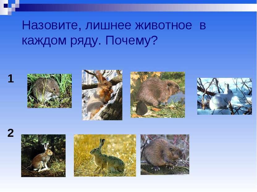 Назовите, лишнее животное в каждом ряду. Почему? 1 2