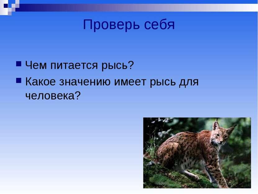 Проверь себя Чем питается рысь? Какое значению имеет рысь для человека?