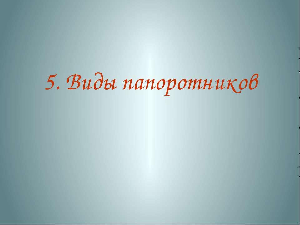 5. Виды папоротников