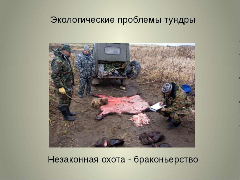 Экологические проблемы тундры Незаконная охота - браконьерство
