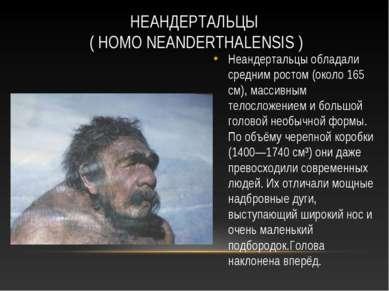 НЕАНДЕРТАЛЬЦЫ ( HOMO NEANDERTHALENSIS ) Неандертальцы обладали средним ростом...