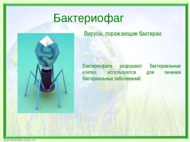 Вирусы, поражающие бактерии. Бактериофаги разрушают бактериальные клетки, исп...