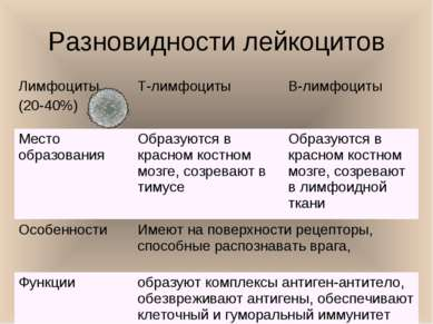 Разновидности лейкоцитов Лимфоциты (20-40%) Т-лимфоциты В-лимфоциты Место обр...