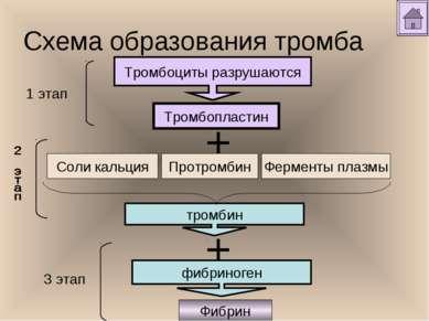 Схема образования тромба Тромбоциты разрушаются Тромбопластин тромбин Фибрин ...
