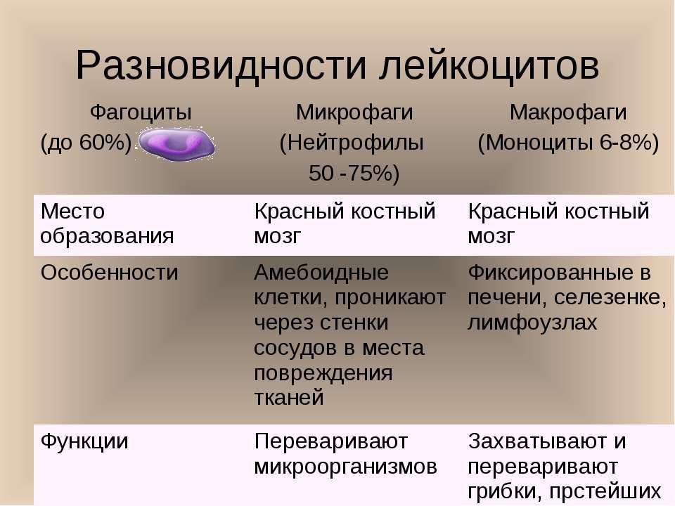 Разновидности лейкоцитов Фагоциты (до 60%) Микрофаги (Нейтрофилы 50 -75%) Мак...