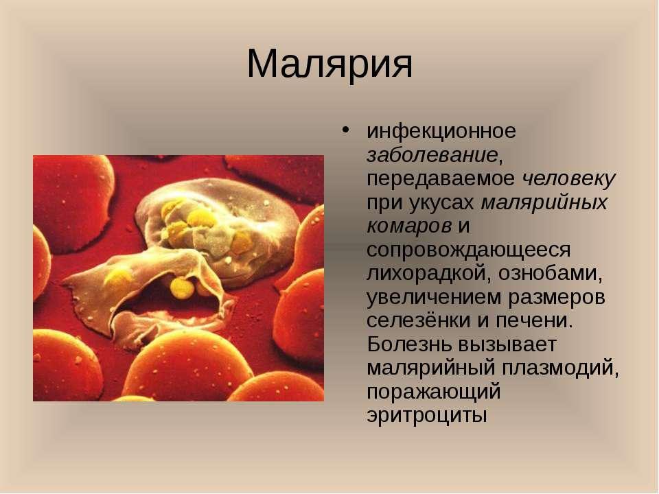 Малярия инфекционное заболевание, передаваемое человеку при укусах малярийных...