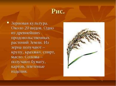 Рис. Зерновая культура. Около 20 видов. Одно из древнейших продовольственных ...