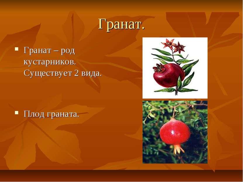Гранат. Гранат – род кустарников. Существует 2 вида. Плод граната.
