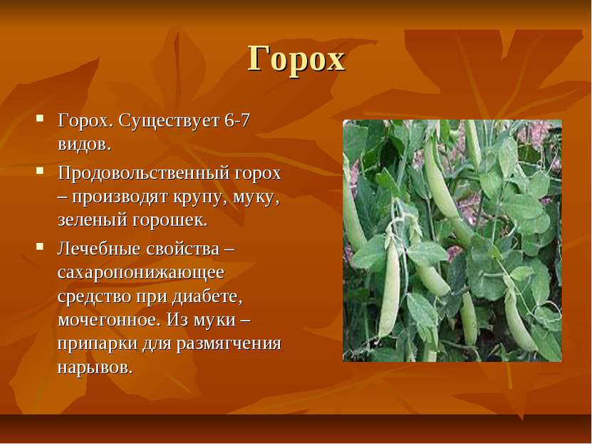 Горох Горох. Существует 6-7 видов. Продовольственный горох – производят крупу...