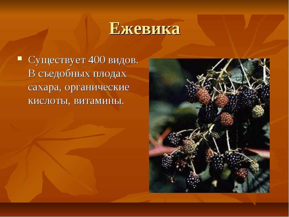 Ежевика Существует 400 видов. В съедобных плодах сахара, органические кислоты...