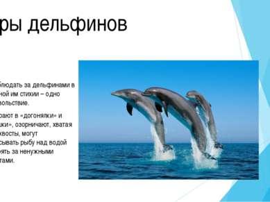 Чуть больше о дельфинах Дельфины – ловкие и прожорливые хищники. Питаются они...