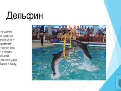 Выносливые дельфины Тело дельфинов устроено очень продуманно и функционально....