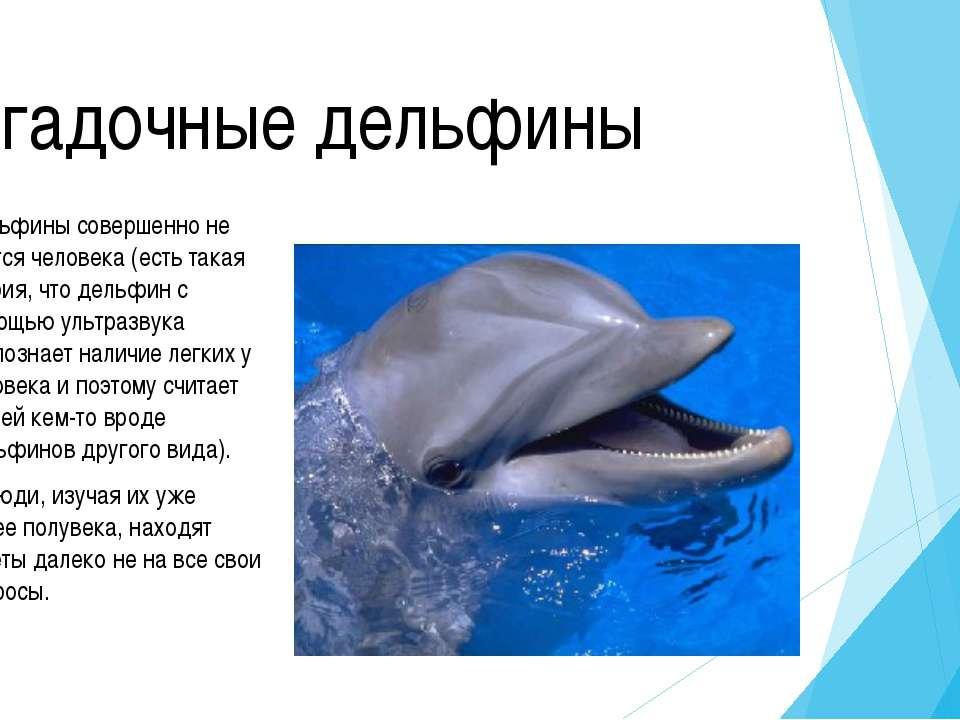 Дельфин У дельфинов очень развиты зрение и слух – на огромном расстоянии они ...
