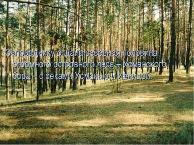 Заповеднику отдана северная половина огромного островного леса – Усманского б...