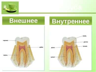 Строение зуба Внешнее Внутреннее