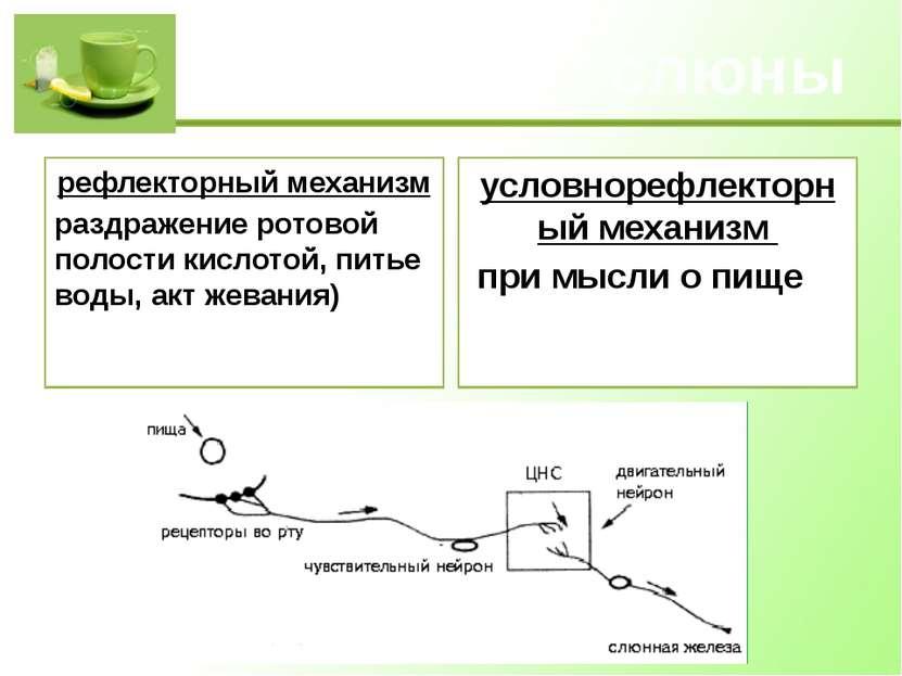 Выделение слюны рефлекторный механизм раздражение ротовой полости кислотой, п...