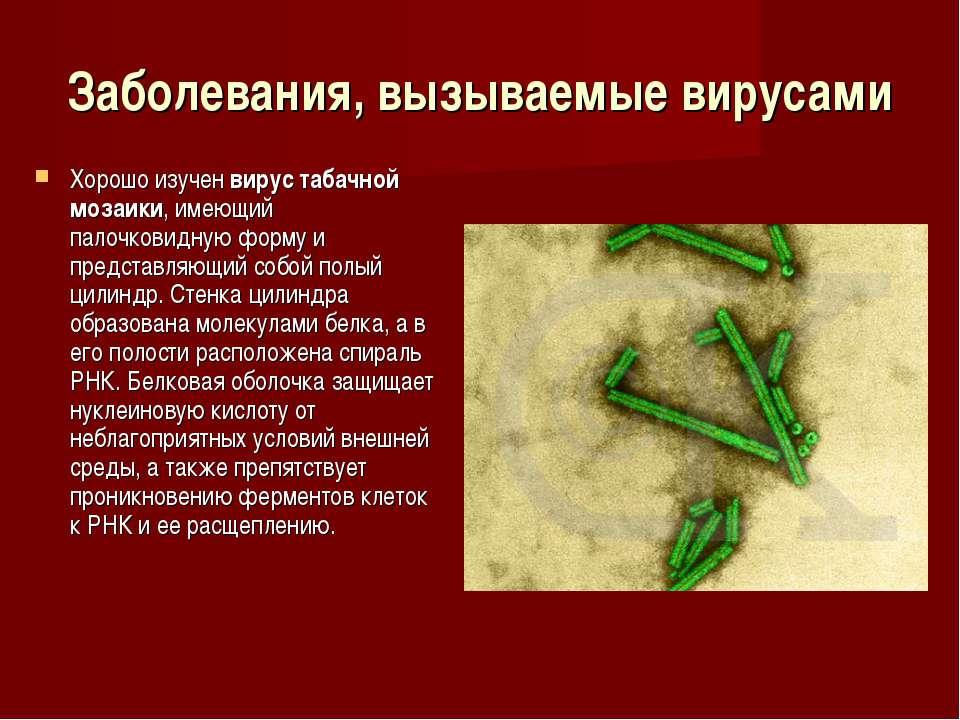 Заболевания, вызываемые вирусами Хорошо изучен вирус табачной мозаики, имеющи...