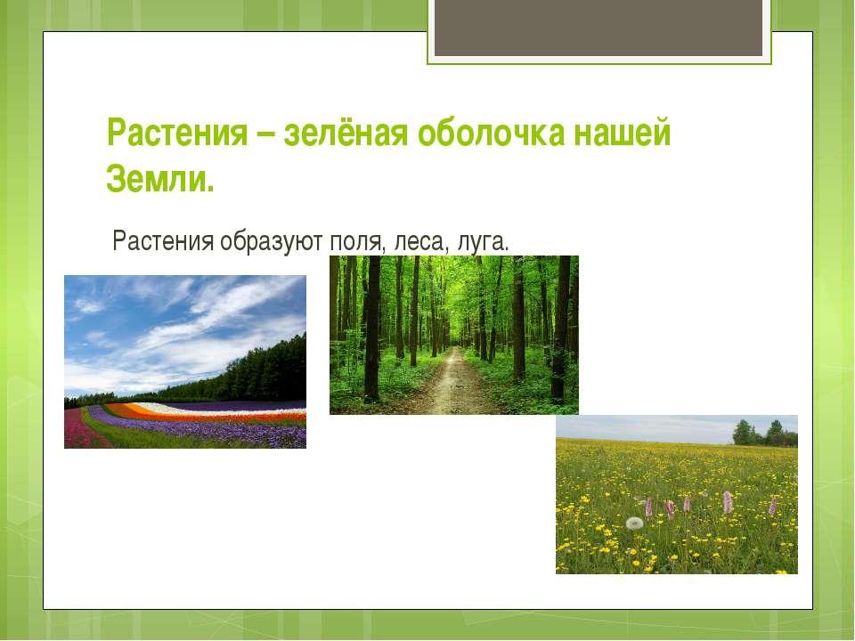 Растения – зелёная оболочка нашей Земли. Растения образуют поля, леса, луга.