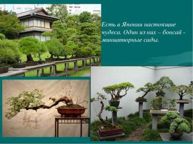 Есть в Японии настоящие чудеса. Один из них – бонсай - миниатюрные сады.