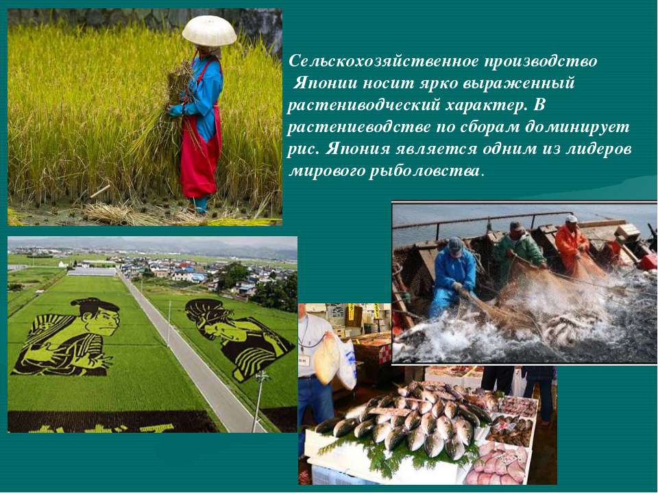 Сельскохозяйственное производство Японии носит ярко выраженный растениводческ...