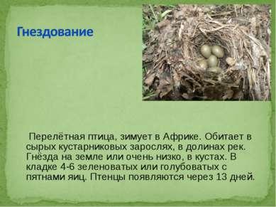 Перелётнаяптица, зимует вАфрике. Обитает в сырых кустарниковых зарослях, в ...