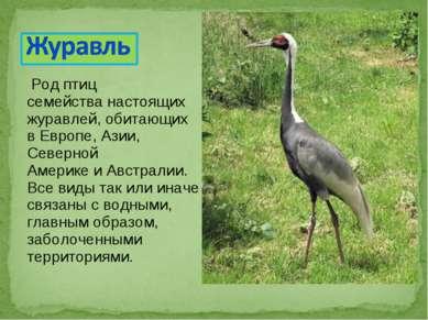 Род птиц семействанастоящих журавлей, обитающих вЕвропе,Азии, Северной Аме...